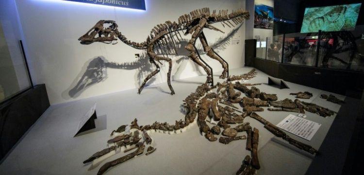 Japonya'da bulunan fosilden yeni bir dinozor türü keşfedildi