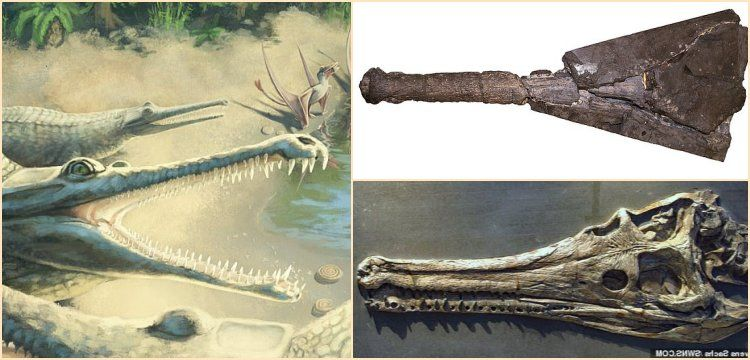 Mystriosaurus laurillardi identified 250 years after fossil find