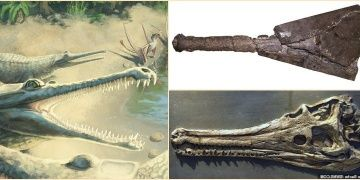 Mystriosaurus laurillardi identified 250 years after fossil find