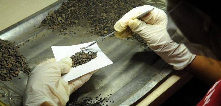 Bingöl'de Urartular döneminden kalma buğday taneleri bulundu