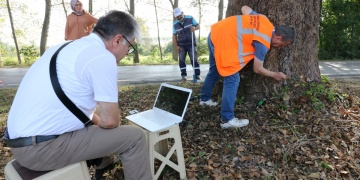 Kocaelideki asırlık anıt ağaçların röntgeni çekildi