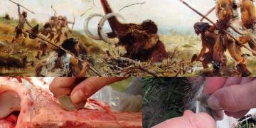 Taş devri insanları mamutları nasıl kesiyordu?