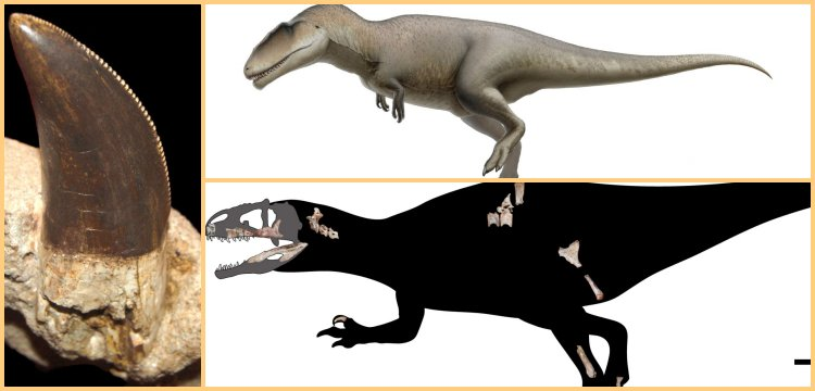 A new species of predatory dinosaur: Siamraptor suwati