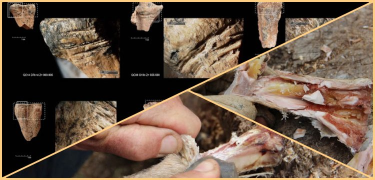 Bone marrow storage and delayed consumption at Paleolithic period