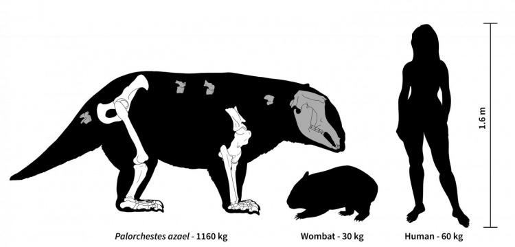 Avustralya'da bir zamanlar çok iri ve tuhaf keseli hayvanlar yaşamış