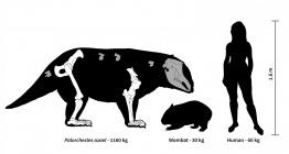 Avustralyada bir zamanlar çok iri ve tuhaf keseli hayvanlar yaşamış