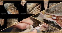 Paleolitik çağda insanın yiyecek saklayabildiğinin bilinen en eski kanıtı