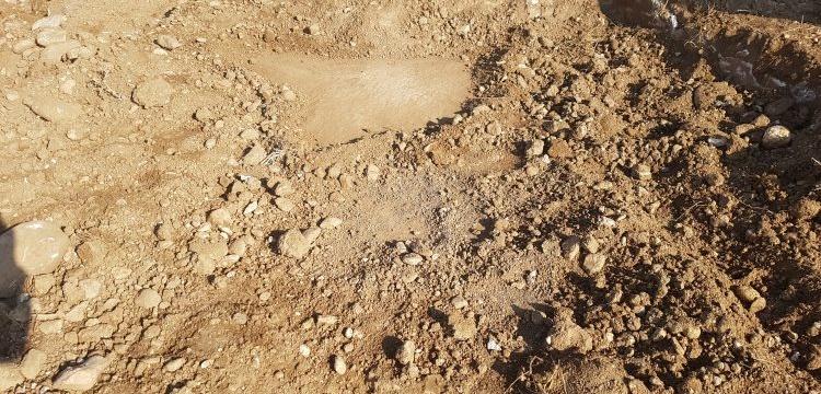 Adıyamanlı çiftçi tarla sürerken Bizans mozaiği buldu