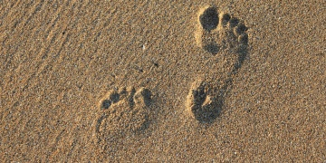 Homo Sapiensin muhtemel ana yurdunun bulunduğu iddia edildi