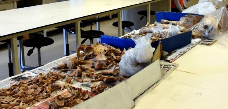 Kurutlu'dan çıkan 2 bine yakın fosil parçası tek tek inceleniyor