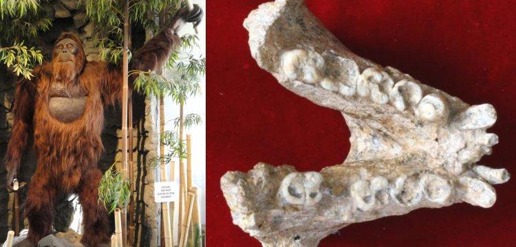 Dev insanımsı tür Gigantopithecus blacki orangutanlarla akraba çıktı