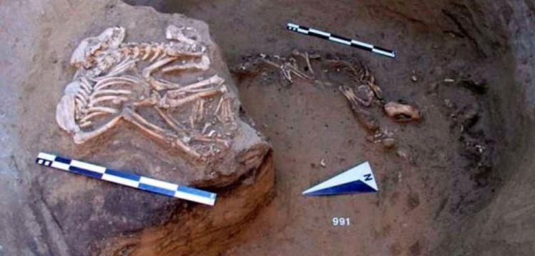 Sibirya'da boynuzdan geyik kafası ve kemikten kuş figürü bulundu