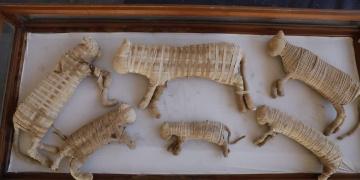 Sakkaradaki arkeoloji kazılarında 75 kedi mumyası bulundu