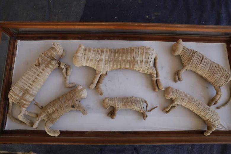 Mısır'daki arkeoloji kazılarında kedi heykelleri ve mumyaları bulundu