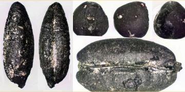 Eskişehirin ilk çiftçilerinin 8 bin önce tarıma başladığı tespit edildi