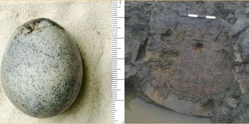 İngilterede 1.700 yıllık tavuk yumurtası ve sepet bulundu