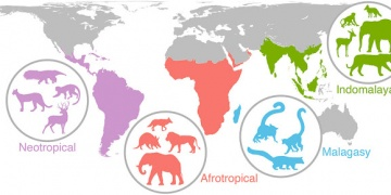 Tied the prehistoric times to the global future