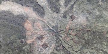 386 milyon yıllık ormanın fosilleşmiş kalıntıları bulundu