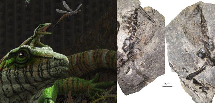 Earliest fossil evidence of parental behaviour discovers