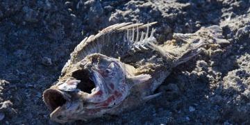 Geleceğin fosil kayıtları paleontolojik değil, arkeolojik olacak