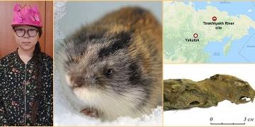11 yaşındaki kız 41 bin yıllık mumyalaşmış lemming buldu