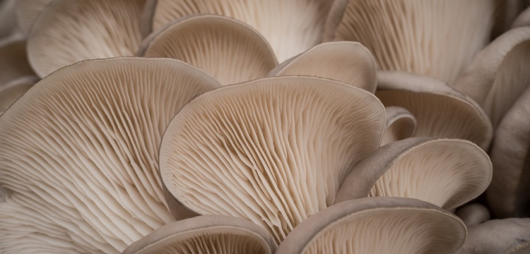 Eight hundred million years old fungal remains found