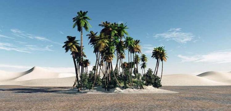 İki bin yıllık tohumlardan Hurma Ağacı yetiştirildi