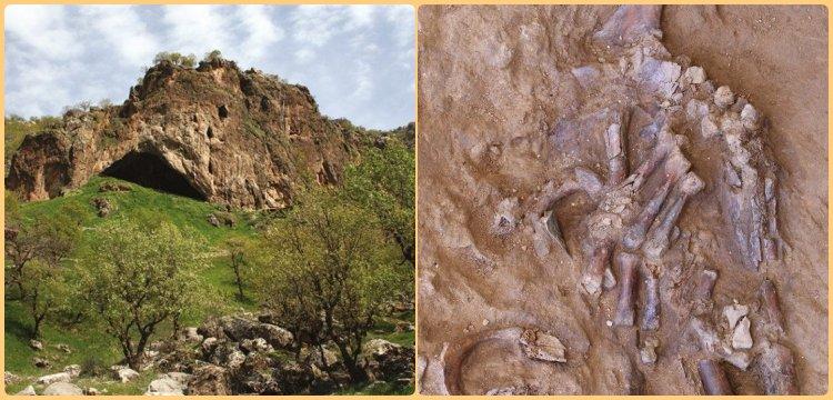 Irak'ta bir Neandertalin ezilmiş kafatası ve gövde kemikleri bulundu