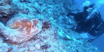 Antalyadaki dünyanın en eski batık kazısı canlı yayınlanacak