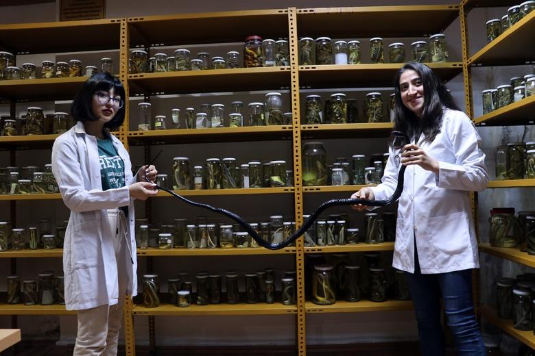 Yılan Müzesi 185 tür sürüngene ev sahipliği yapıyor