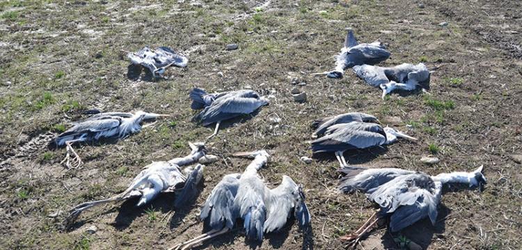 Nehil Sazlığında Esrarengiz Kuş Ölümleri