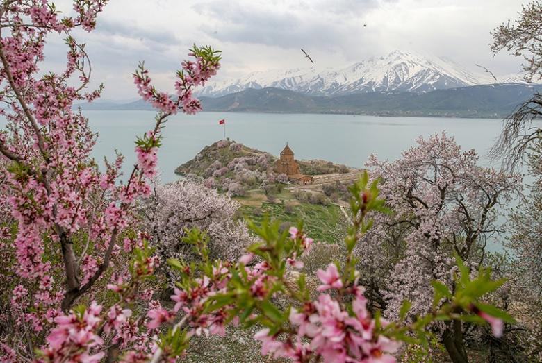 Akdamar Adasına bahar geldi, bademler çiçek açtı