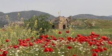Hierapolis Antik Kenti gelincik tarlasına döndü