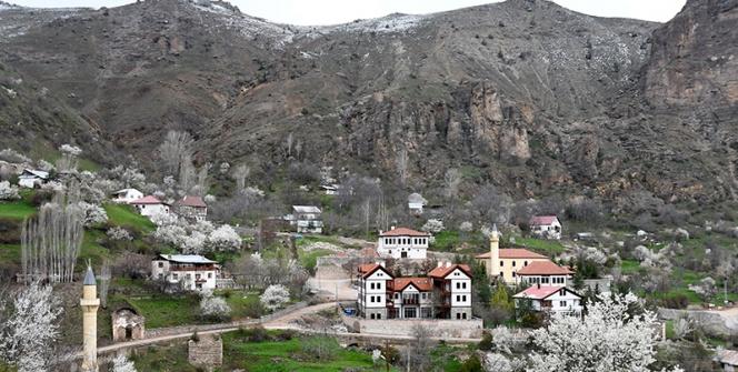 Süleymaniye yahut Eski Gümüşhanede meyve ağaçları çiçek açtı