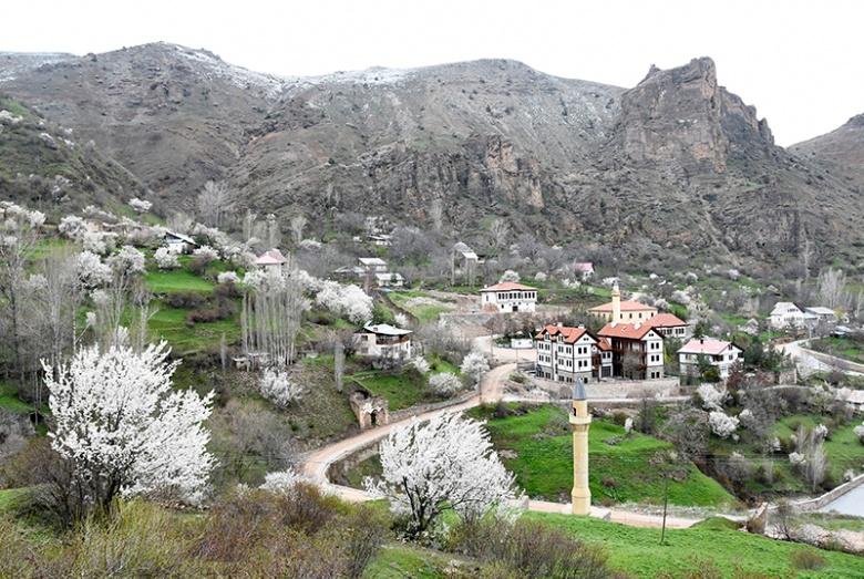 Süleymaniye yahut Eski Gümüşhane'de meyve ağaçları çiçek açtı