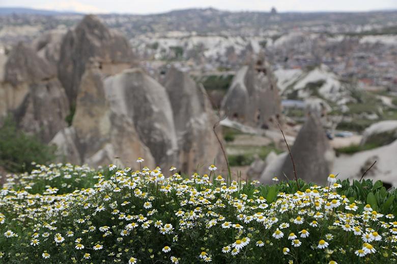 Kapadokya'da  Peribacaları ve çiçeklerden görsel şölen