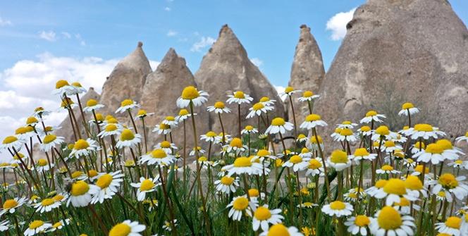 Kapadokyada Peribacaları ve çiçeklerden görsel şölen
