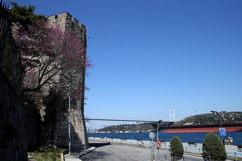 Erguvan:  İstanbul'un nazlı güzeli