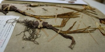 Türkiyenin 130 bin bitki örneği ISTE Herbaryumunda korunuyor
