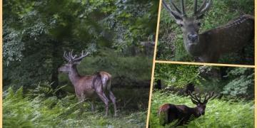 İstanbul ormanlarındaki yaban hayatı canlandı