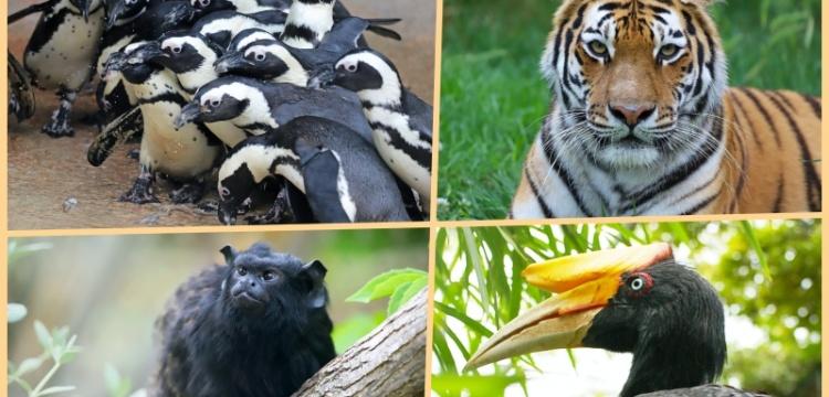 Faruk Yalçın Hayvanat Bahçesi yeniden ziyarete açılıyor