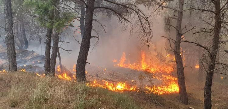 Gelibolu yarımadasındaki orman yangını söndürülmeye çalışılıyor