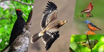 Kazdağları kuş envanterine 5 yeni tür eklendi