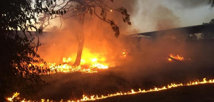 Alata Bahçe Kültürleri Araştırma Enstitüsü'nde yangın
