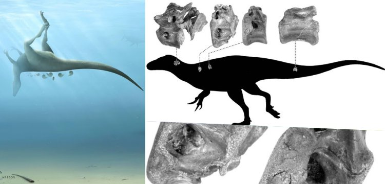 Four bones of the new species of dinosaur found: Vectaerovenator inopinatus
