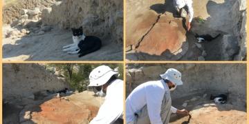 Eceabat Maydos Kilisetepe höyüğü kazı ekibine bir kedi katıldı