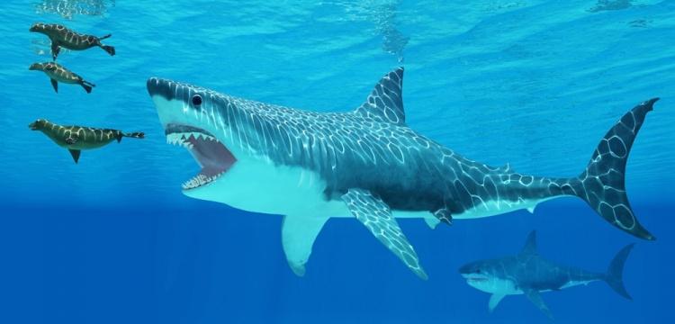 Megalodon köpekbalığın boyu hesaplandı
