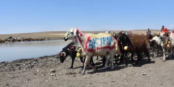 Kars Çoban Bayramı