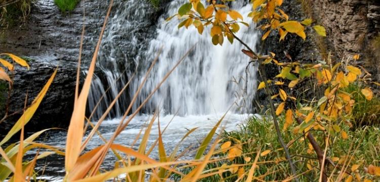 Sarıkamış Ormanları'nda sonbaharın renk cümbüşü
