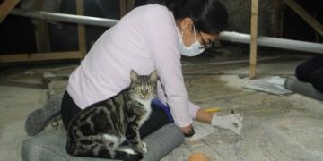 Sinopta bulunan 1600 yıllık mozaiklerin restorasyonu devam ediyor